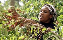 咖啡豆的产地